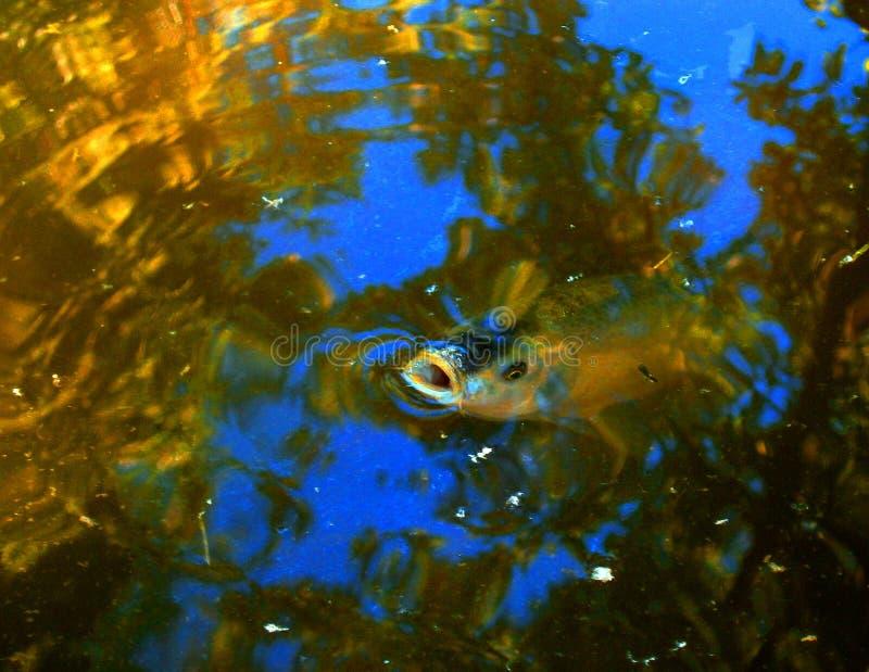 Che cosa sta accadendo sulla superficie dell'acqua? fotografie stock libere da diritti