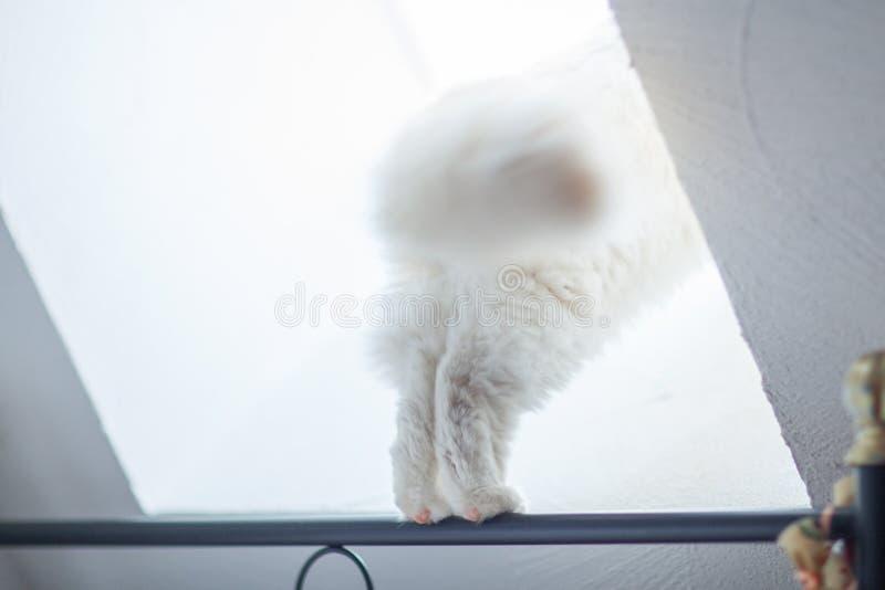 Che cosa sta accendendo là? il gatto curioso, zampe del gatto equilibra sul davanzale immagini stock libere da diritti