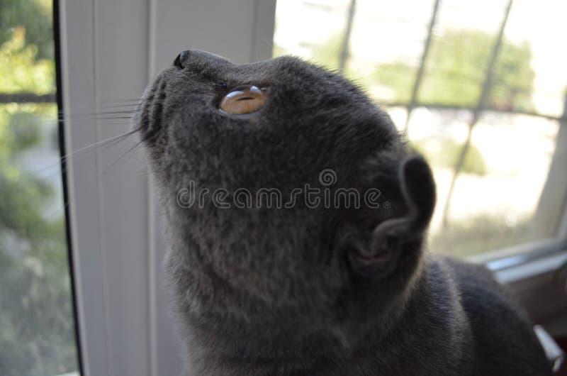 ?at che osserva fuori la finestra immagini stock