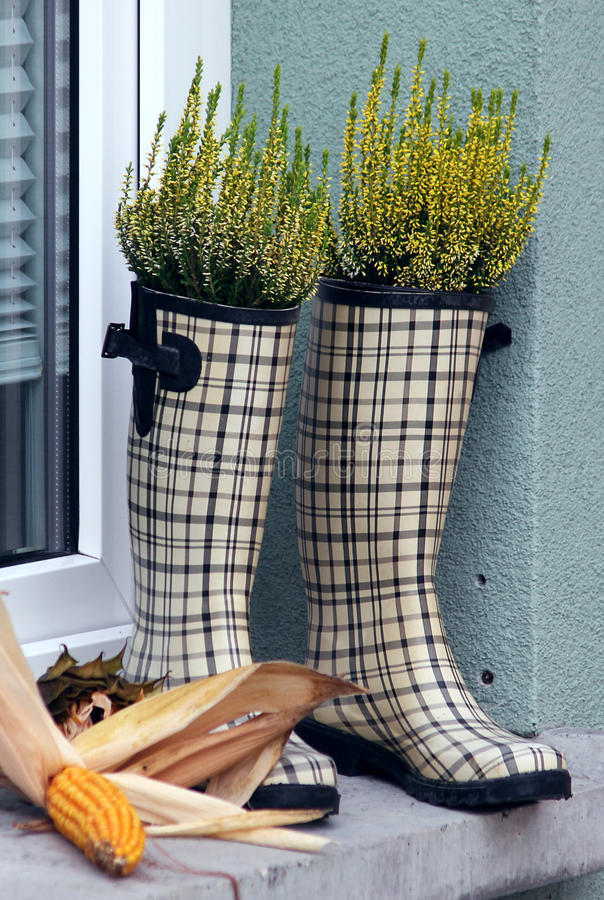 Download Checked rubber boots stock photo. Image of growing, concept - 22163272