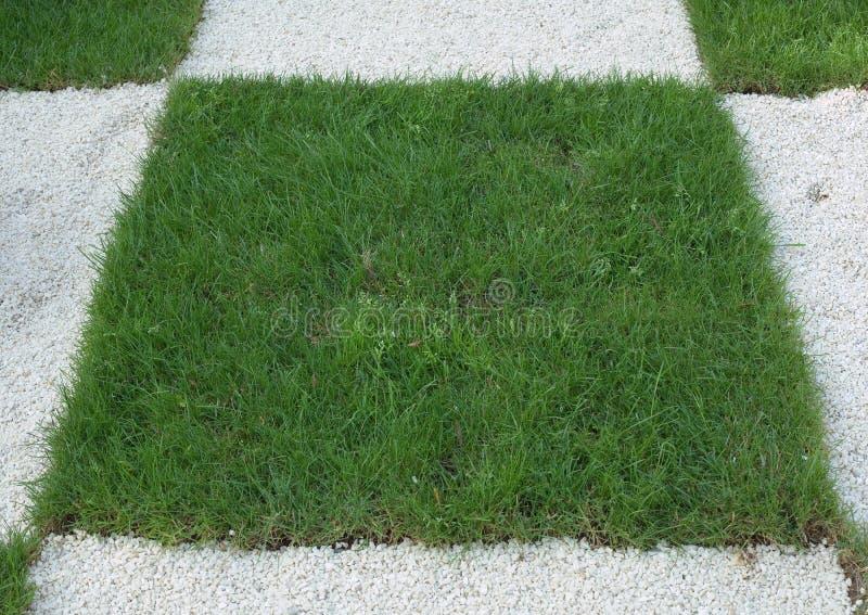 Checkered трава стоковое изображение rf