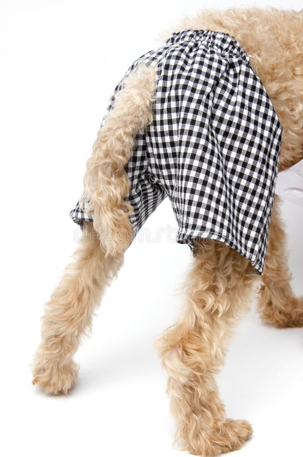 Download Checkered Rear End stock image. Image of funny, boxer - 20424021