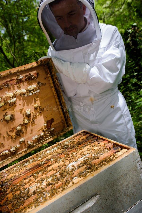 Checking the bee box. Checking stock photos