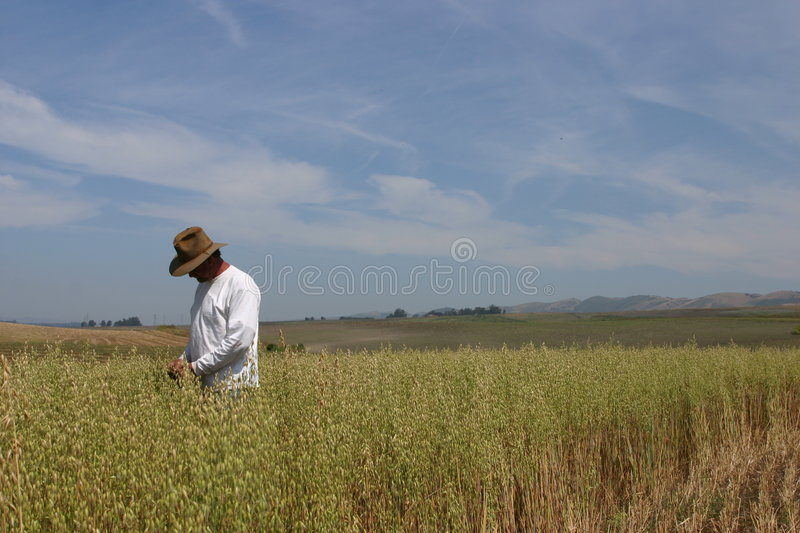 Checking The Crop Stock Photography