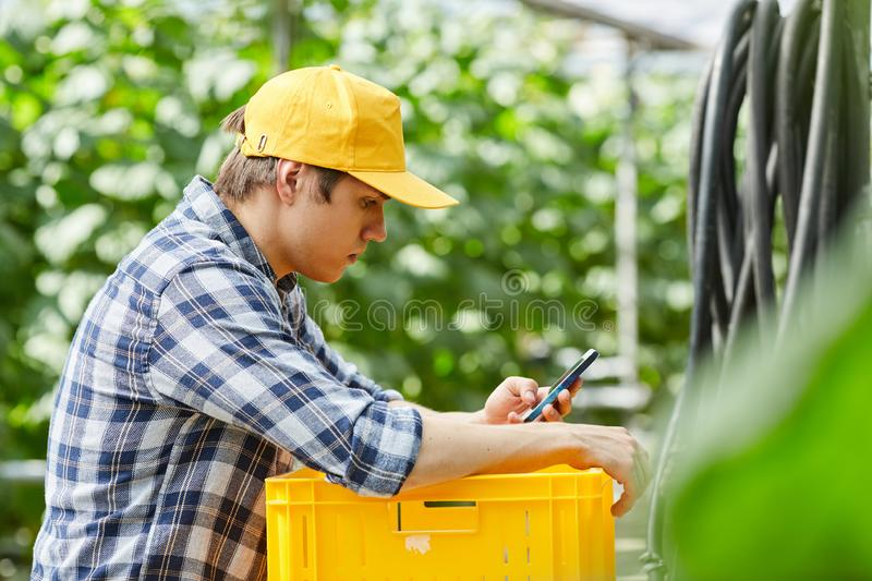 Checking phone in greenhouse stock images
