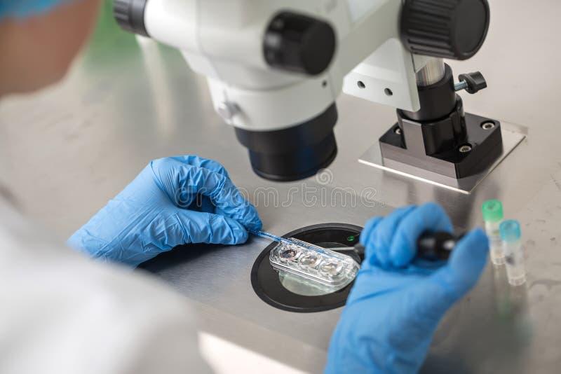 Checking result of in vitro fertilization royalty free stock image