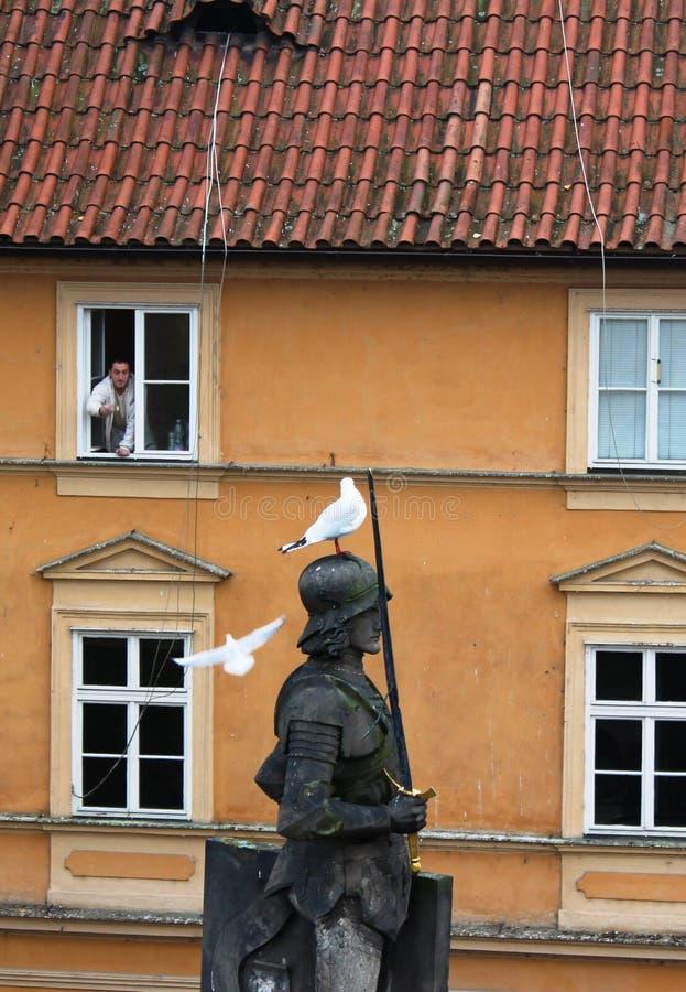 Checo, Praga: Un hombre alimenta gaviotas de la ventana de la casa foto de archivo libre de regalías