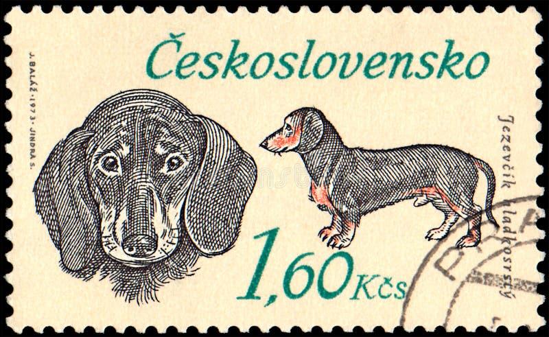 CHECOSLOVÁQUIA - CERCA DE 1973: um selo, impresso em Checoslováquia, mostra um bassê fotos de stock