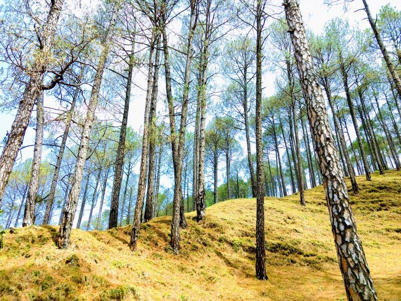 Cheed-Bäume lizenzfreie stockfotografie