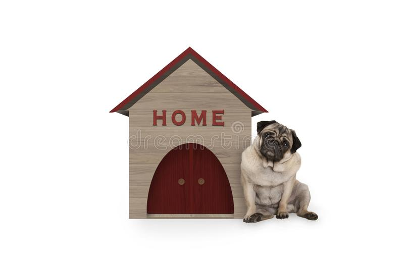 Cheeky pug puppy dog sitting down next to dog house with sign Home stock photography
