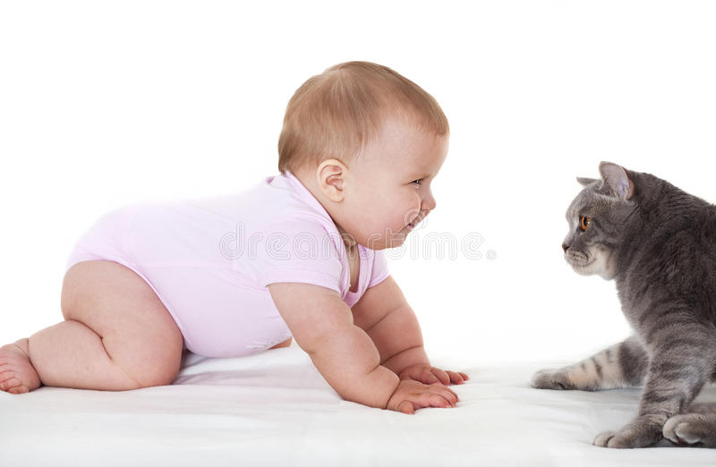 Download Cheerful babe with cat. stock photo. Image of cunning - 22598182