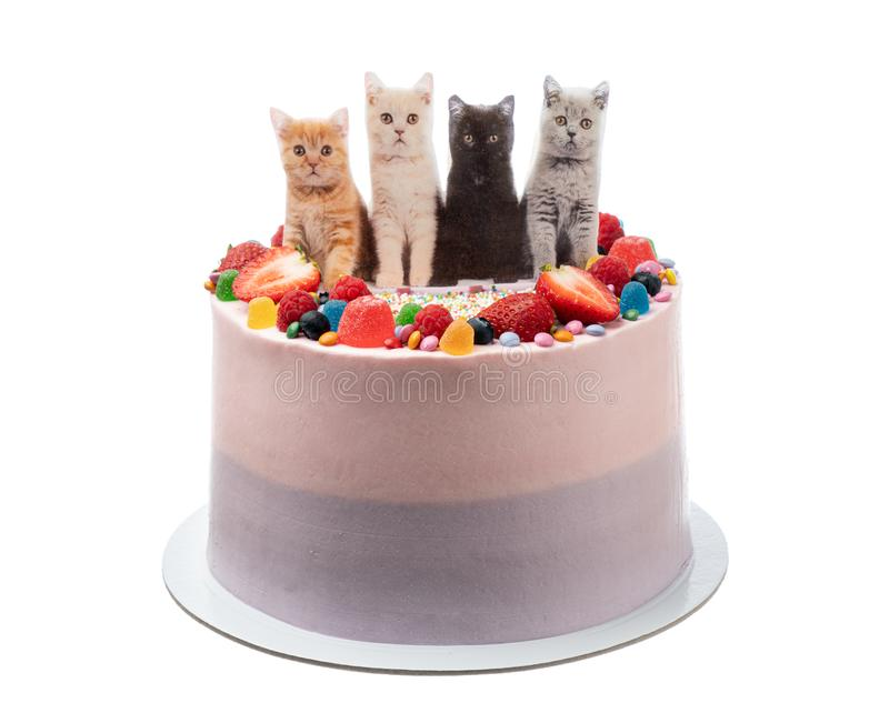 Cheerful birthday cake made of sweets and cats. On a white background. stock photography