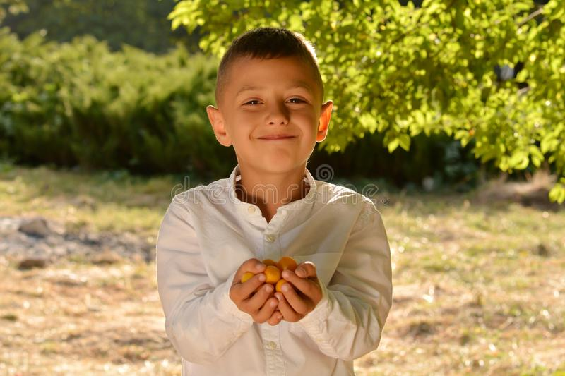 Cheerful boy holding a handful of ripe yellow plums stock photography