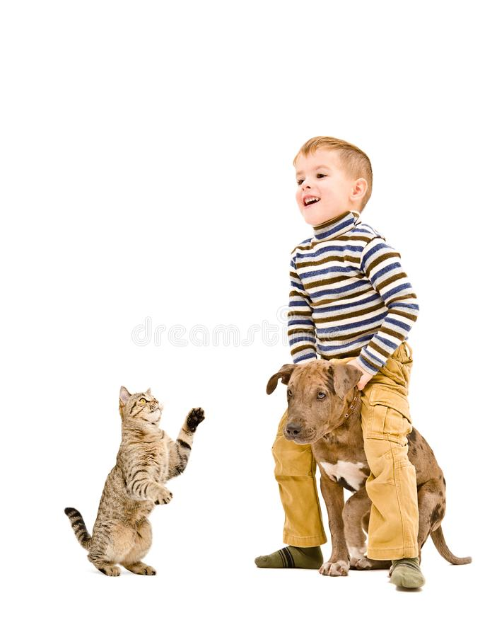 Cheerful boy playing with a puppy  and cat. Isolated on white background royalty free stock photography
