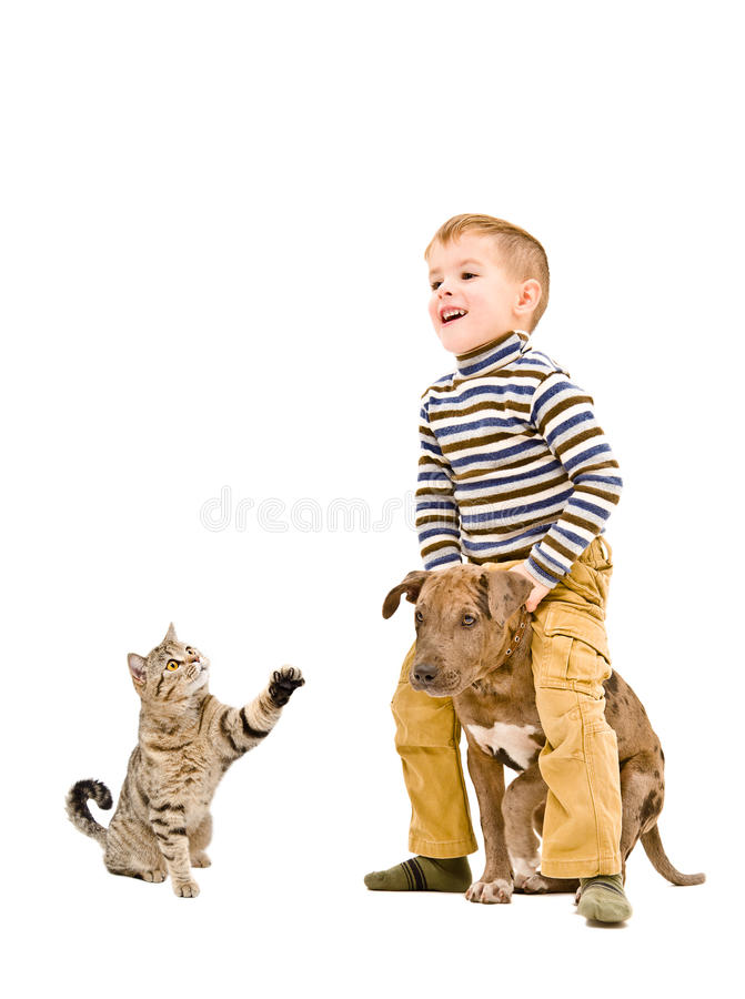 Cheerful boy playing with a puppy pitbull and cat. Isolated on white background stock images