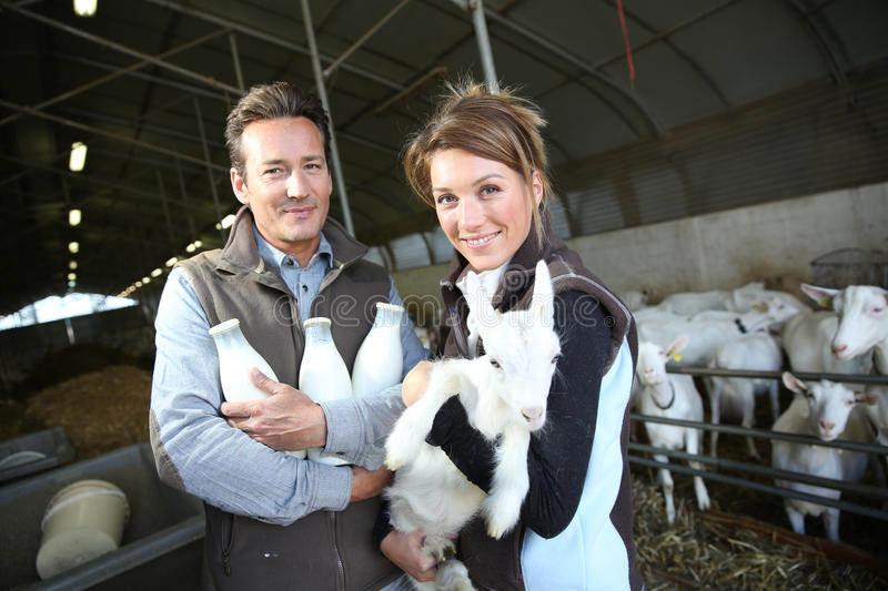Cheerful breeders holding a goat and bottles of milk. Cheerful couple of breeders in barn with goats stock photos