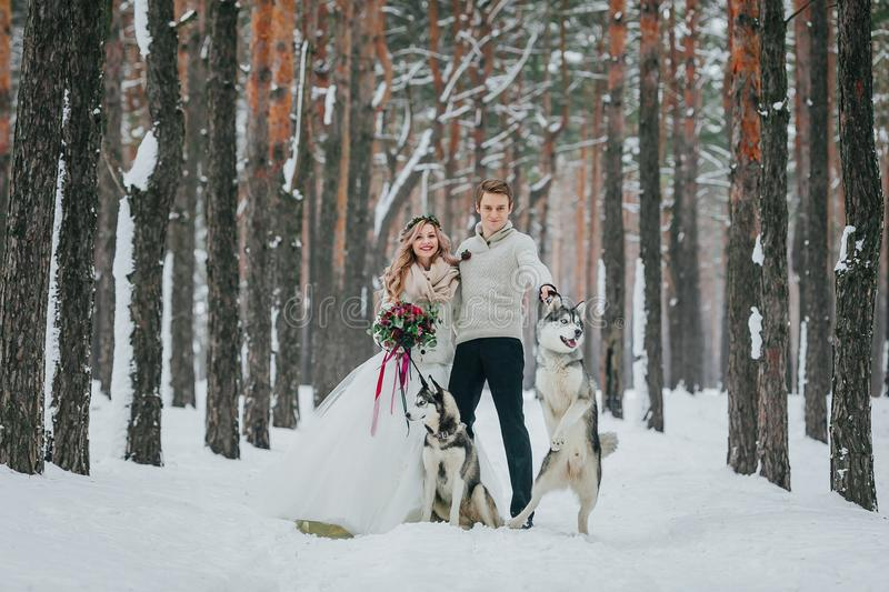 Cheerful bride and groom with two siberian husky are posed on background of snowy forest. Artwork. Copy space stock photos