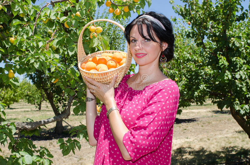 Cheerful brunette picking fruits stock photos