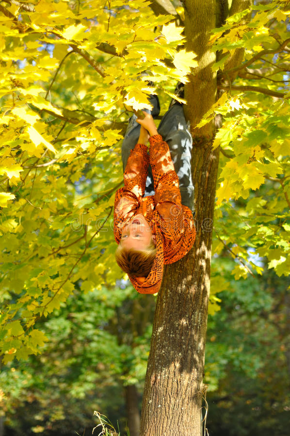 Cheerful child hang on tree stock photography