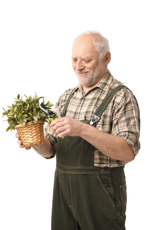 Cheerful elderly man holding plant smiling stock images