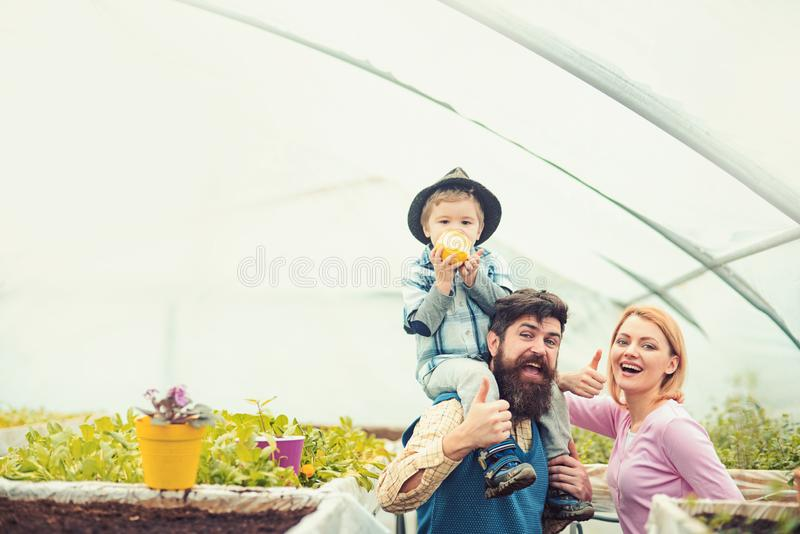 Cheerful family in greenhouse. Father in blue vest holding his son on shoulders while kid is eating apple. Bearded man royalty free stock images