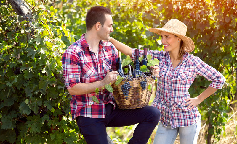 Cheerful farmers couple in vineyard stock photo