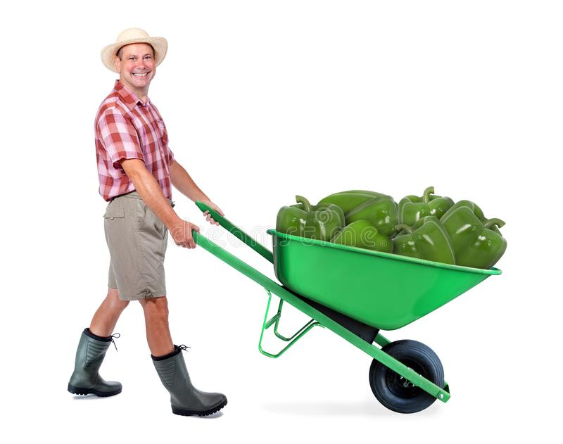 Cheerful gardener carrying a large green paprik. A man pushing a wheelbarrow with big paprik. Successful vegetable farmer grower. Large harvest of genetically royalty free stock photo