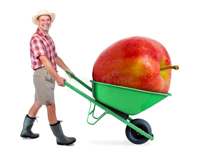 Cheerful gardener carrying a large red apple. A man pushing a wheelbarrow with huge apple. Successful fruit grower. Large harvest of genetically modified foods royalty free stock photography