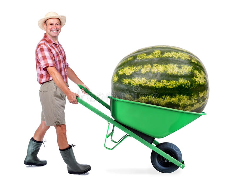 Cheerful gardener carrying a large watermelon. A man pushing a wheelbarrow with huge water melon. Successful fruit and vegetables grower. Large harvest of stock images