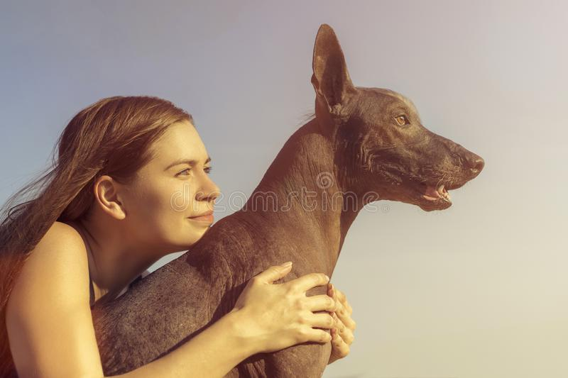 Cheerful pretty young girl sitting and hugging her dog xoloitzcuintli at the blue sky at sunset stock photography