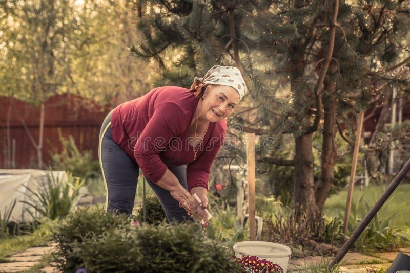 Cheerful senior women gardener working in garden royalty free stock photos