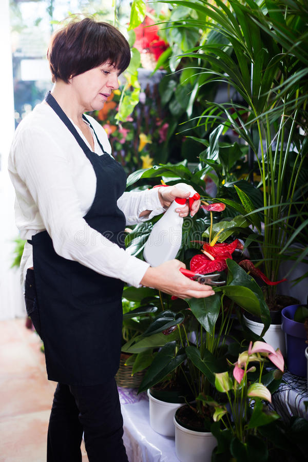 Cheerful shop assistant tending red anturion stock photo