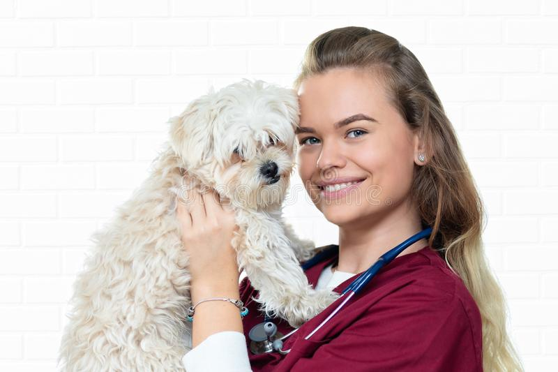 Cheerful veterinarian woman holding adorable puppy in vet clinic royalty free stock photos