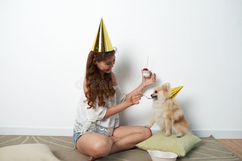 Feeding with birthday cake. Cheerful Vietnamese young woman feeding her dog with birthday cake royalty free stock image