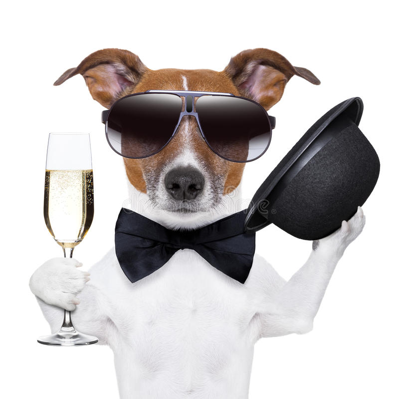 Cheers dog. With a glass of champagne and a black hat