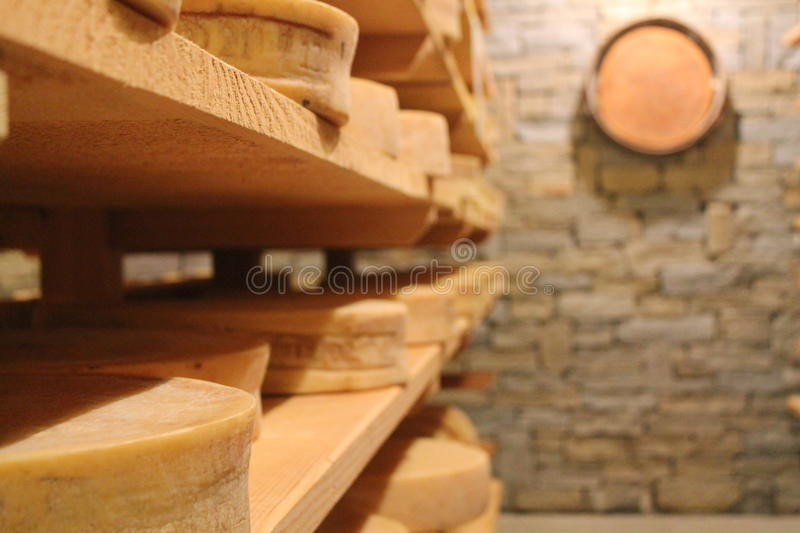 Cheese ageing royalty free stock photo
