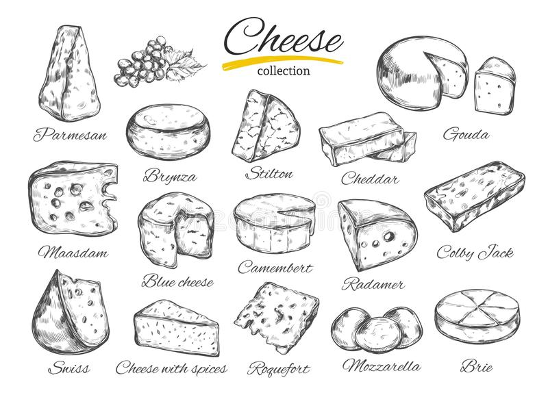 Cheese collection Vector hand drawn illustration of cheese types stock illustration