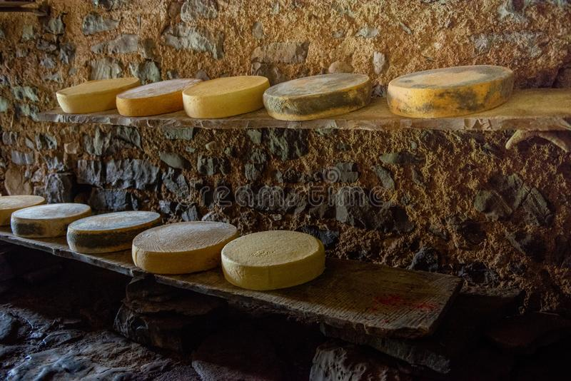 Cheese on the mountain pasture. While it is maturing on the farm royalty free stock photography
