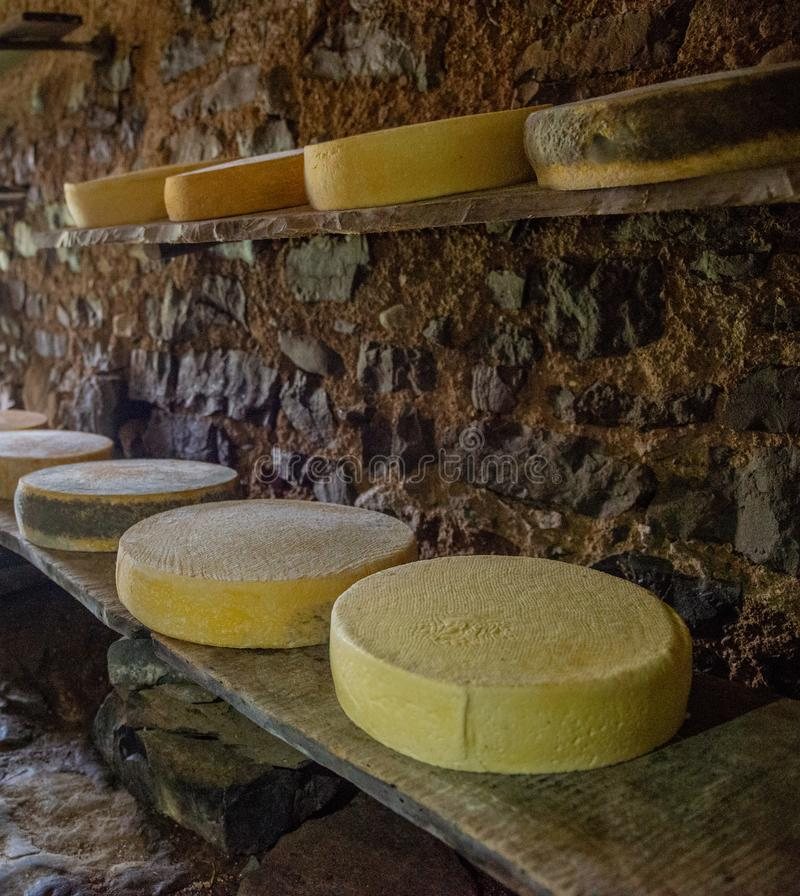 Cheese on the mountain pasture. While it is maturing on the farm royalty free stock image