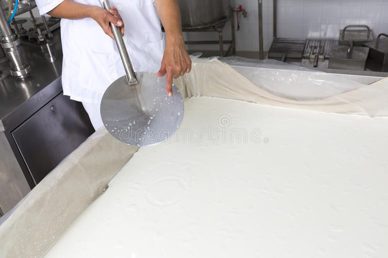 Cheese production creamery dairy worker coagulation. A woman working in a small family creamery is showing the process of coagulation in a cheese batch. The stock images