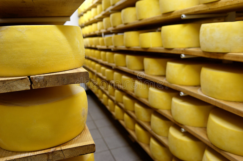 Cheese in shelves royalty free stock photo