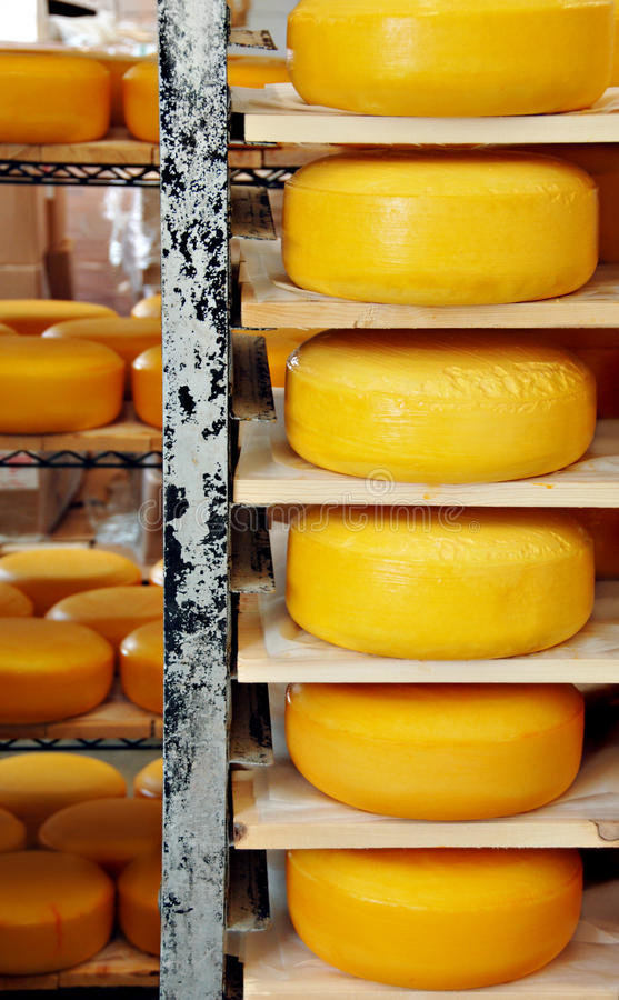 Cheese Wheels. Wheels of cheese stacked on shelves at a factory stock photography