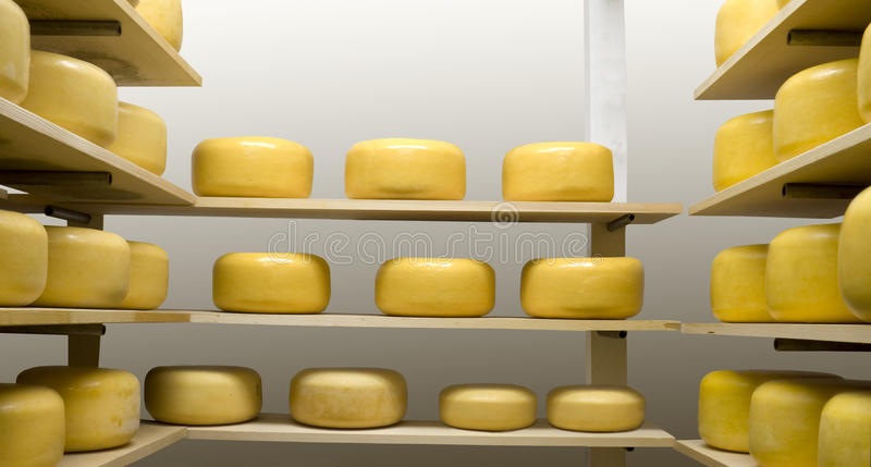 Cheese Wheels. Maturing in an Aging Room royalty free stock photo