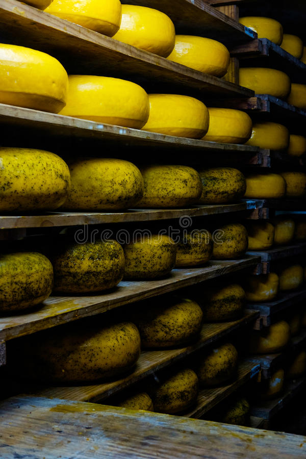 Cheese wheels in a cheese factory. Cheese wheels in a row in a cheese factory royalty free stock images