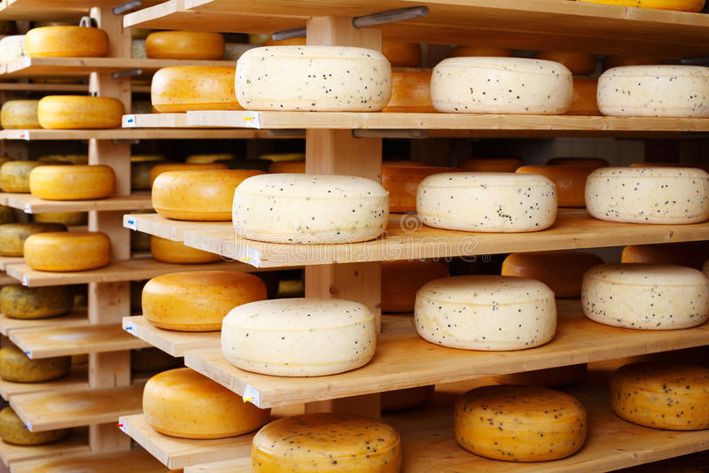 Cheese wheels in factory. Assorted flavours of cheese wheels maturing on rows of wooden shelves in a cheese factory stock image