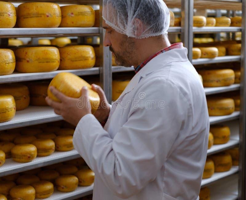 Cheesemaker som kontrollerar den klara produkten i ett lagringsrum arkivfoton