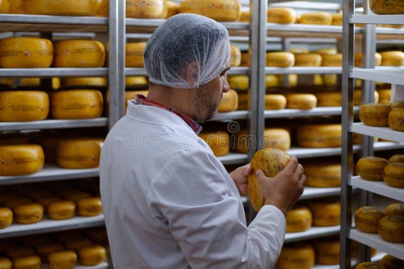Cheesemaker som kontrollerar den klara produkten i ett lagringsrum royaltyfri foto