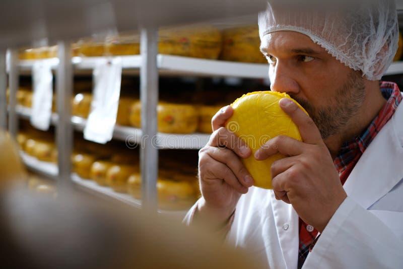 Cheesemaker som kontrollerar den klara produkten i ett lagringsrum royaltyfri bild