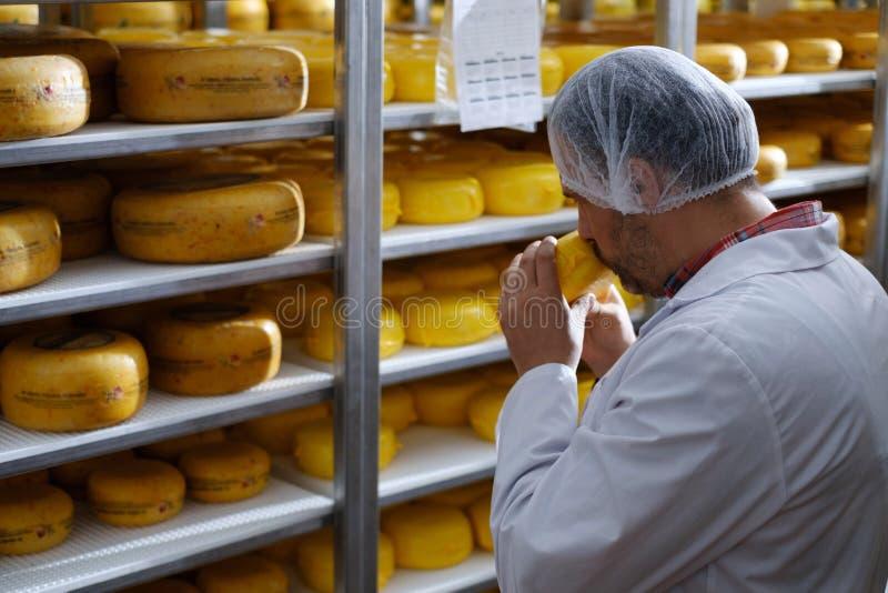 Cheesemaker som kontrollerar den klara produkten i ett lagringsrum arkivfoto