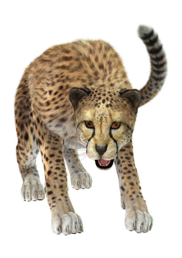 cheetah royalty-vrije illustratie